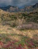 Blixtstorm på tröskeln i Santa Catalina Range, sydliga Arizona Arkivfoto