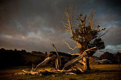 blixttree Fotografering för Bildbyråer