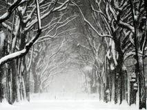 Blizzard 01 de Central Park Fotografia de Stock
