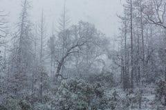 blizzard photographie stock libre de droits