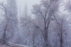 blizzard images libres de droits