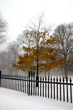 Blizzard. Winter in Boston Stock Photography