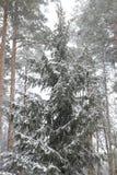 blizzard Lizenzfreies Stockbild