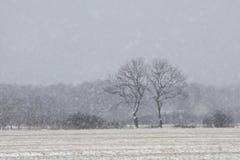 Blizzard auf den Gebieten Stockfoto