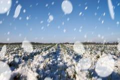 Blizzard auf Weizenfeld Stockbild
