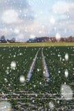 Blizzard auf Weizenfeld Stockbilder