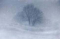 Blizzard auf Wiese mit Baum im Winter Lizenzfreie Stockfotografie