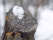 Blizzard bark Stock Photography