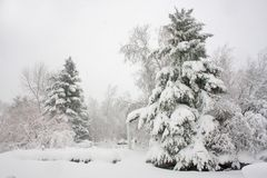 Blizzard day. Trees covered with snow during long time blizzard stock photo