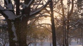 Blizzard in de Forest Forms Snowfall Against The-Zonsondergang en de Sneeuwvlokkenfonkeling stock footage
