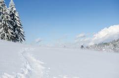 Blizzard in den Bergen Stockbilder