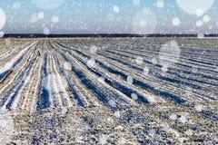 Blizzard in der Landschaft Stockfoto