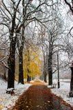 Blizzard in der Stadt. Schwerer Schneesturm in Europa. Lizenzfreie Stockbilder