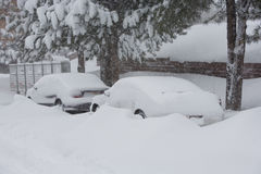 Blizzard do inverno imagem de stock royalty free