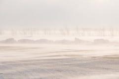 Blizzard e tempestade de neve. Fotografia de Stock