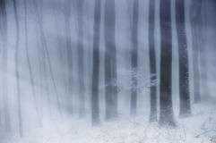 Blizzard in een bos met mist en sneeuw in de winter Royalty-vrije Stock Afbeeldingen