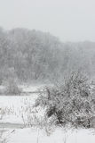 Blizzard in February Stock Image