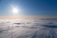 Blizzard in the field. In solar weather Royalty Free Stock Photo