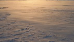 Blizzard In A Field Where Snowflakes And Frost Fly At The Wind At Golden Sunset stock footage