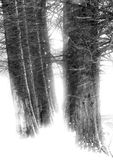 Blizzard forest. Trees in the snow - blizzard, winter forest stock image
