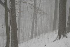 Blizzard in the forest. As if framed by the trunks Royalty Free Stock Image