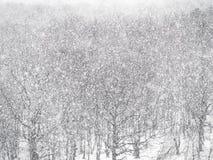 Blizzard forte da neve sobre madeiras na floresta fotos de stock