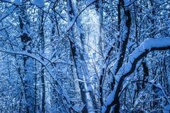 Blizzard im Abendwinterwald Stockbilder