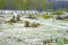 Blizzard im Frühjahr Grüne und schneebedeckte abstrakte Landschaft mit Stockbild