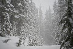 Blizzard im Kieferwald Lizenzfreies Stockfoto