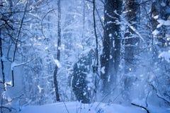Blizzard im mysteriösen Winterwald am Abend Stockfoto
