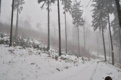 Blizzard im Wald Lizenzfreie Stockfotografie