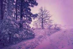 Blizzard im Wald am frühen Morgen Lizenzfreie Stockfotografie
