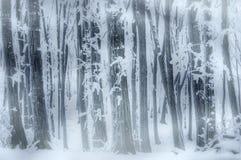 Blizzard im Wald mit Schnee und Frost im Winter Stockbilder