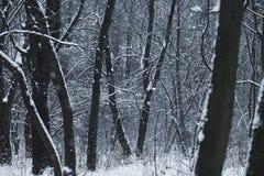 Blizzard im Winterwald Lizenzfreies Stockbild