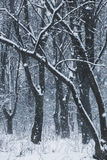Blizzard im Winterwald Stockfoto
