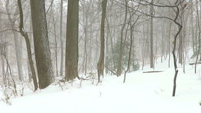 Blizzard of 2016 at a Local Park stock video