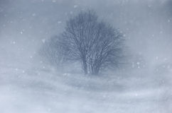 Blizzard on meadow with tree in winter. Blizzard and snow falling on meadow with tree in winter royalty free stock photography