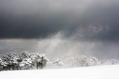 Blizzard mit schneebedeckten Bäumen Lizenzfreies Stockbild