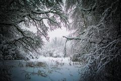 Blizzard na paisagem branca das árvores do parque fotografia de stock royalty free