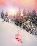 Blizzard nachher Stockbilder