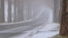 Blizzard over Japanese Road at Metasequoia Namiki, Shiga Prefecture