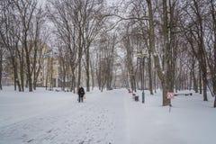blizzard Schneesturm im Waldstarken Schneesturm im Park Schneeco Lizenzfreie Stockbilder