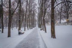 blizzard Schneesturm im Waldstarken Schneesturm im Park Schneeco Stockfotos