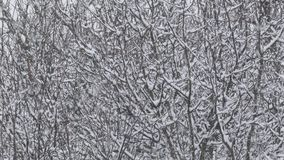 Blizzard Snow Falling - Winter Landscape. Trees during snowstorm in winter covered by snow stock video