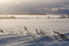 Blizzard sunshine and windy dramatic weather at winter meadows. In Russia landscape Stock Image