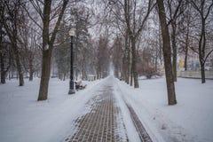 blizzard tempête de neige dans la tempête de neige forte de forêt en parc neige-Co photographie stock libre de droits