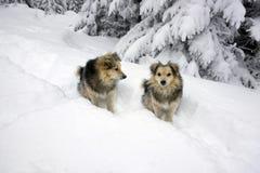 Blizzard und Hund zwei Lizenzfreie Stockbilder