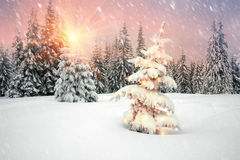 Blizzard- und Weihnachtsbaum Stockfoto