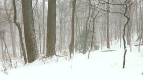 Blizzard van 2016 bij een Lokaal Park stock video