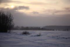 Blizzardly evening landscape. Stock Image